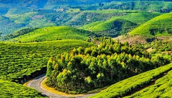 Corporate Package to Ooty